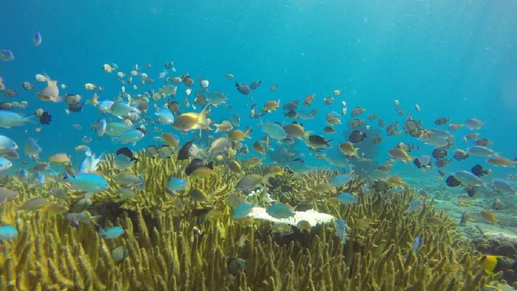 Foto: Dahulu Rusak Parah, Sekarang Taman Laut Ini Penuh Warna