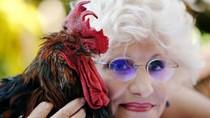 Kokok Ayam Jantan Picu Ketegangan di Prancis, Pengadilan Bersikap