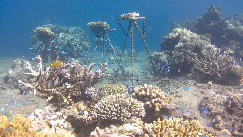 Seperti inilah pemandangan di bawah laut Taman Laut Calabai (dok LSM KOMPPAK)