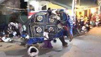 Gajah Mengamuk Ketika Ikut Festival Agama di Sri Lanka, 18 Terluka