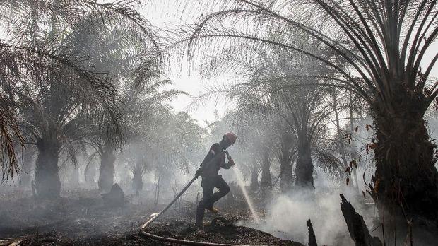 Kebakaran di lahan perkebunan sawit.