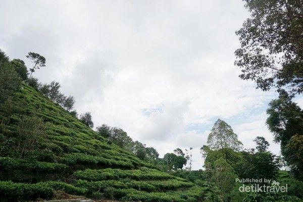 Bukit Borobudur Ngawi