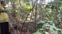 Ada Motor Nyangkut di Atas Bambu di Sleman, Kok Bisa?