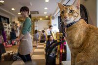 Usai Ngopi, Pengunjung Ini Curi Kucing Seharga Rp 20 Juta di Kafe