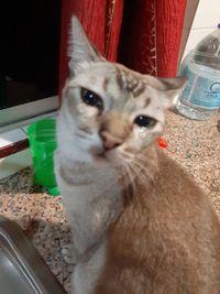 Hiks! Kucing Ini Ikut Nangis Saat Pemiliknya Iris Bawang
