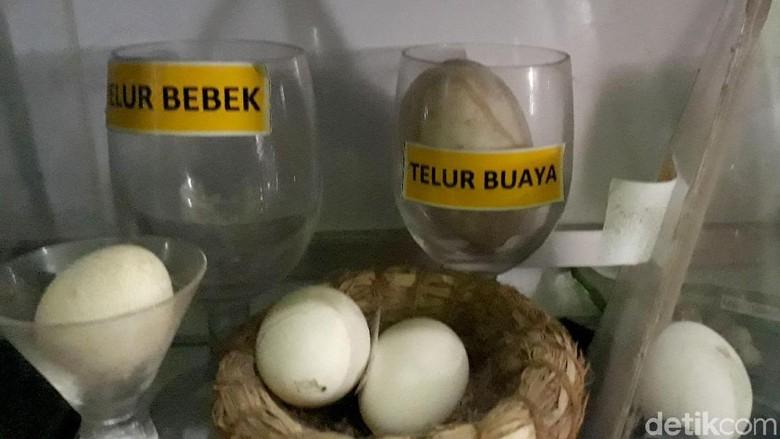 Unik! Pria di Brebes Punya Hobi Koleksi Telur Berbagai Hewan
