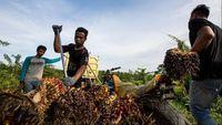 Akhir Januari, RI-Uni Eropa Duel soal Sawit di WTO
