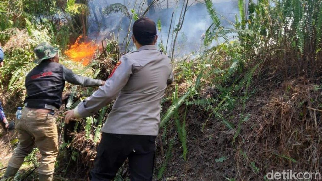 Hutan di Kawasan Gunung Slamet Terbakar
