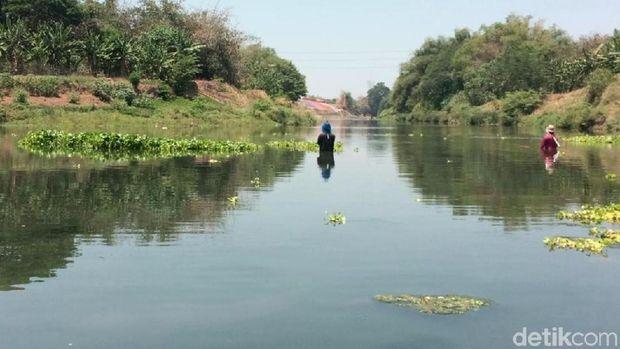 Kala Air Bengawan Solo Sepekat Jelaga dan Merebakkan Aroma Busuk