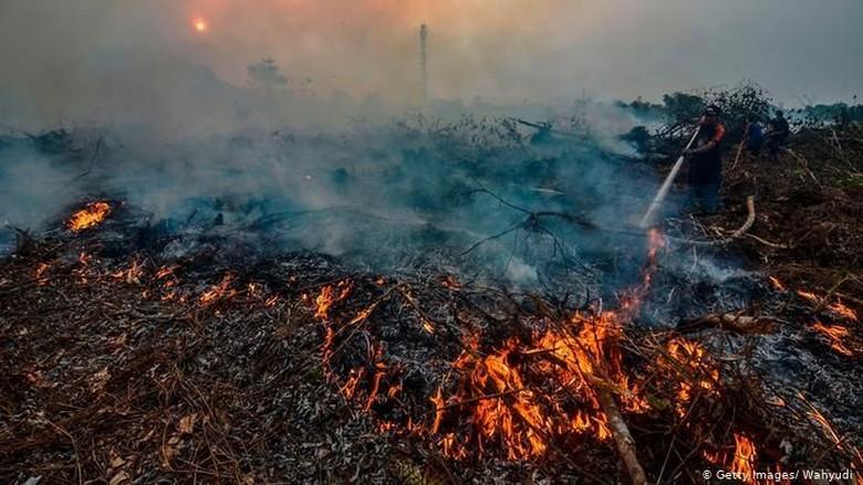Greenpeace: Pengawasan dan Penegakan Hukum Solusi Kebakaran Hutan Indonesia