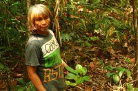 Sebelum Tahu Mecin, Suku Dayak Pedalaman Andalkan Daun Sengkubak