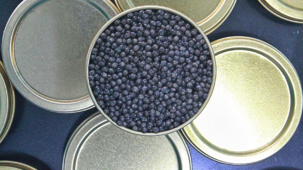 Inilah Kaviar Pertama yang Diproduksi di Malaysia
