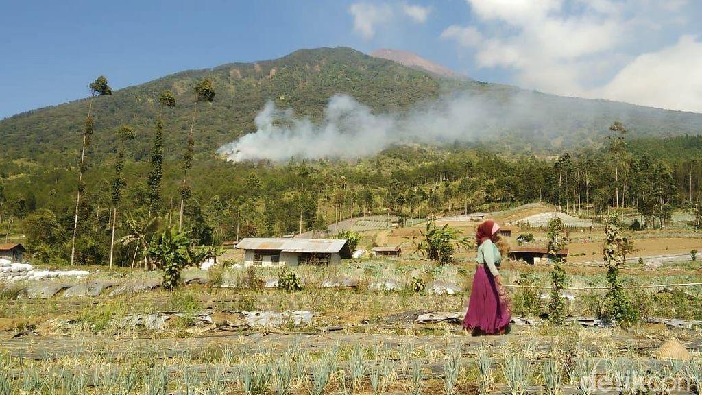Kebakaran Gunung Slamet, 500 Personel Gabungan Sekat Api di 5 Sektor