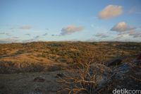 Padang savananya yang bagaikan di Afrika (Afif Farhan/detikcom)