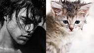 Gaya Kocak Si Kucing Kala Meniru Pose Model Pria