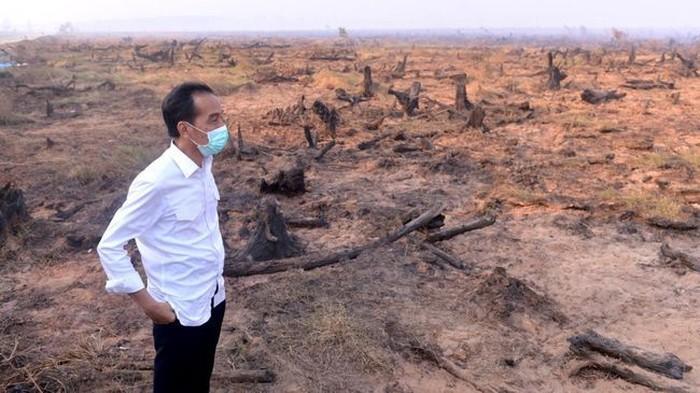 Jokowi di tengah sisa karhutla. (Foto: Setpres)