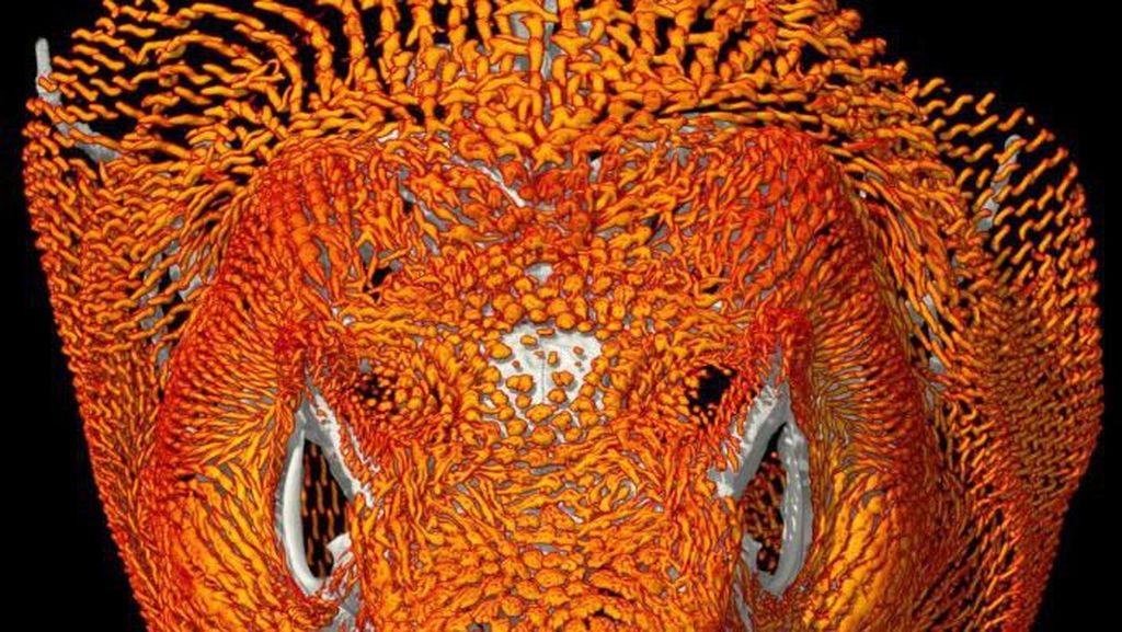 Temuan Mengejutkan Komodo Punya Baju Zirah