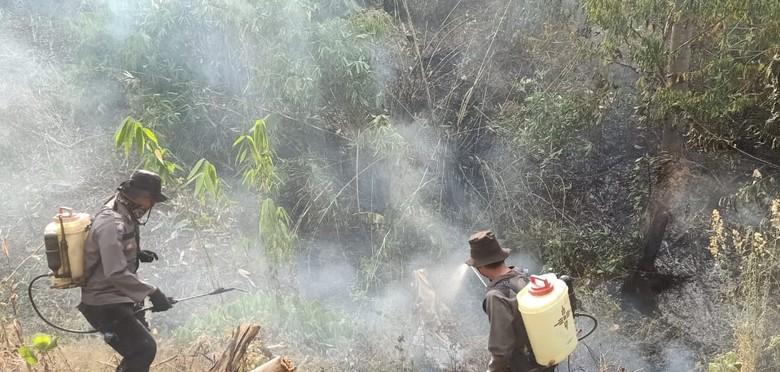 Sudah 2 Pekan, Karhutla di Sulteng Masih Belum Padam