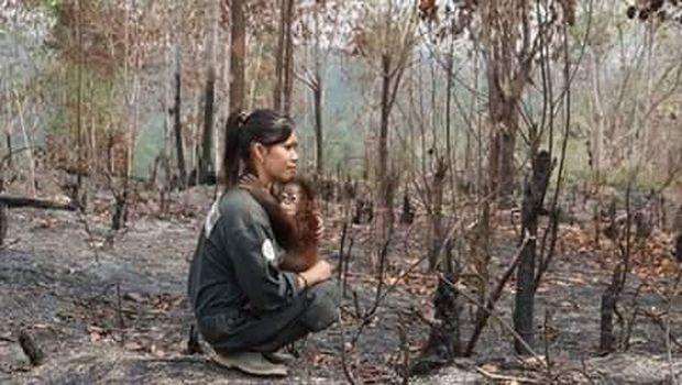 Viral Foto Evakuasi Orang Utan, Ternyata Bukan dari Karhutla 2019