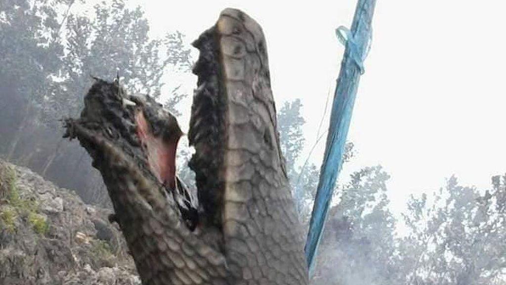 Kata Panji Petualang tentang Ular Raksasa Terbakar di Kalimantan