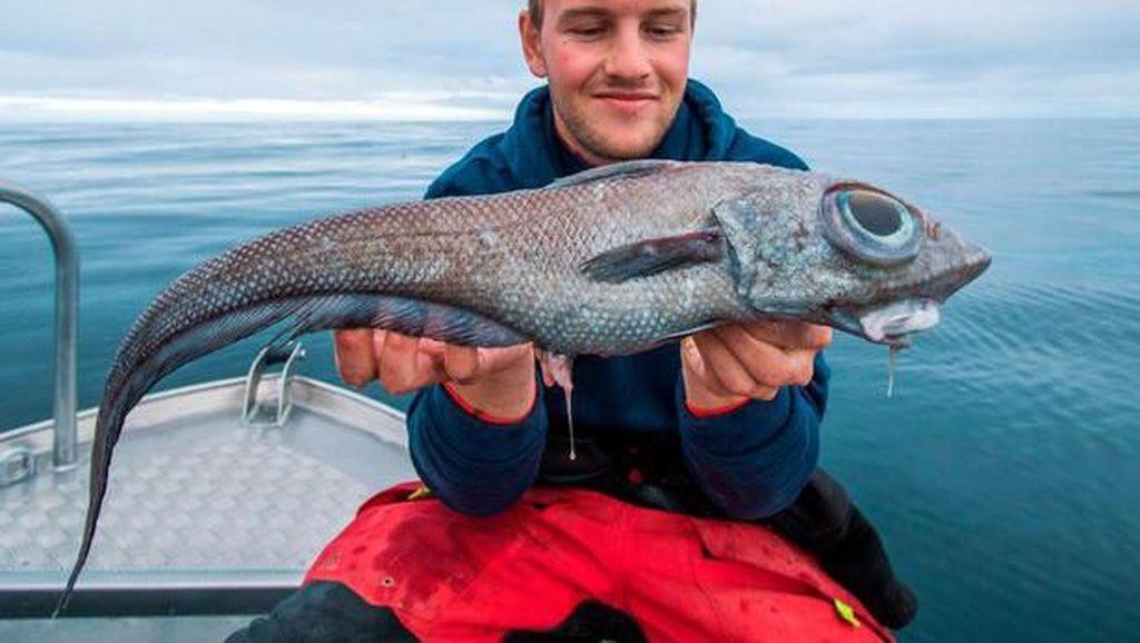 Pemancing Kaget Tangkap Ikan Dinosaurus