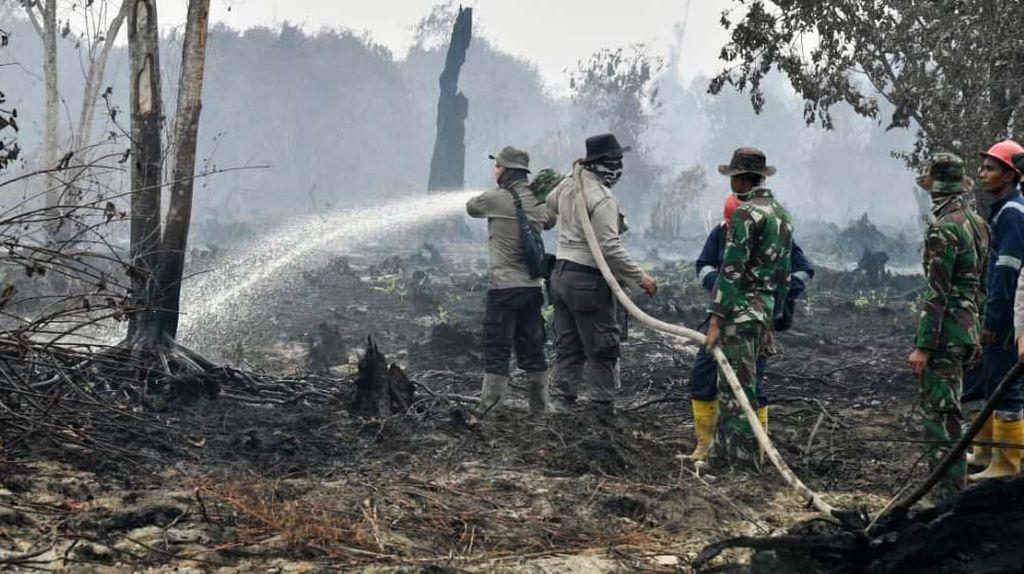 Cegah Kebakaran Hutan Bisa Libatkan Warga Pakai Koperasi