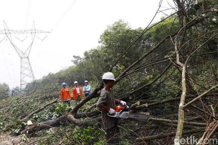 PT PLN (Persero) mengimbau kepada warga untuk tidak menanami pohon keras yang dapat menjulang tinggi di sekitar Saluran Udara Tegangan Tinggi (SUTET). Istimewa/PLN.