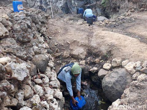 Musim Kemarau, Warga di Gunungkidul Manfaatkan Rembesan Air Pohon Beringin