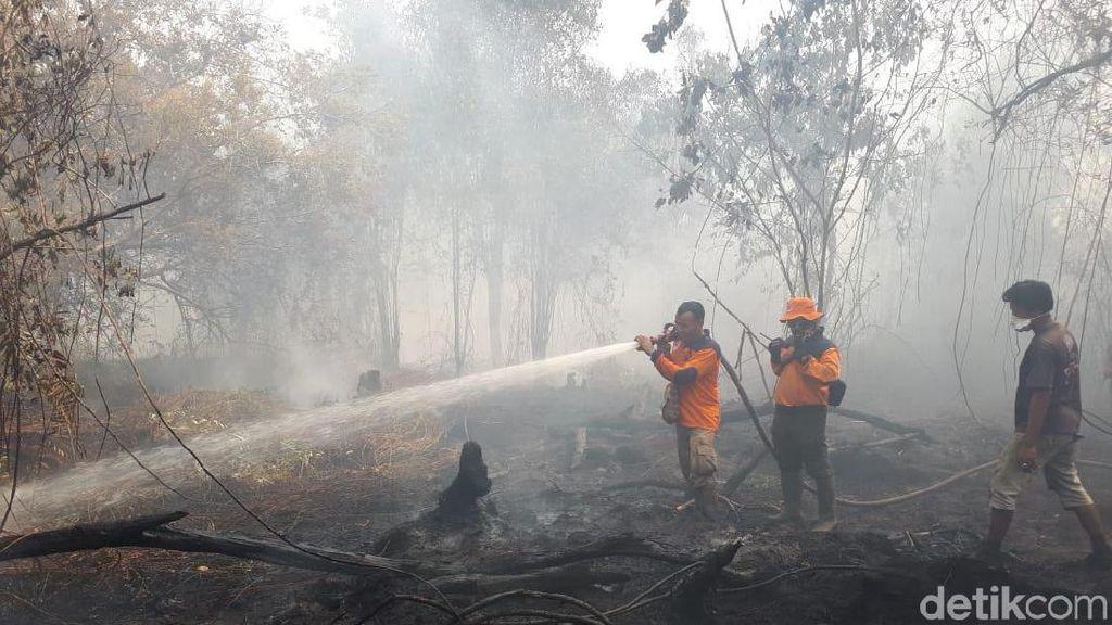 Aturan Ini Harus Direvisi Agar Kebakaran Hutan Tidak Terjadi Lagi