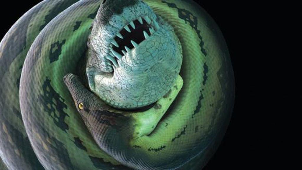 Raja Piton Masih Kalah, Ular Raksasa Titanoboa Makan Buaya Besar
