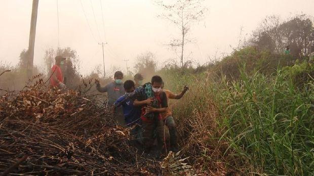 Dievakuasi dari Karhutla, 2 Orang Utan Diberi Nama 'Bara' dan 'Arang'