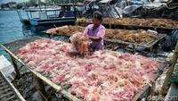 RI Punya Potensi Besar, Ini Tantangan Berat Pengembangan Rumput Laut