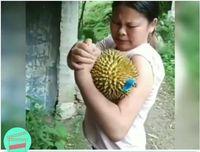 Bikin Ngakak! Kejadian Kocak dan Aneh Ini Karena Buah Durian