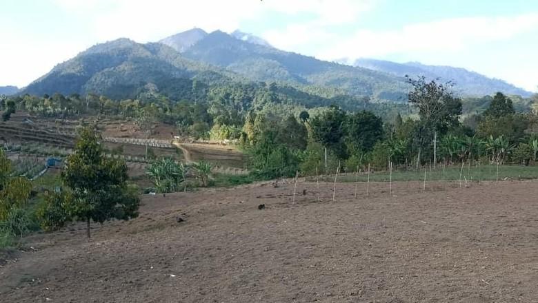 Foto: Hutan Gunung Rinjani gundul (BTNGR/Instagram)