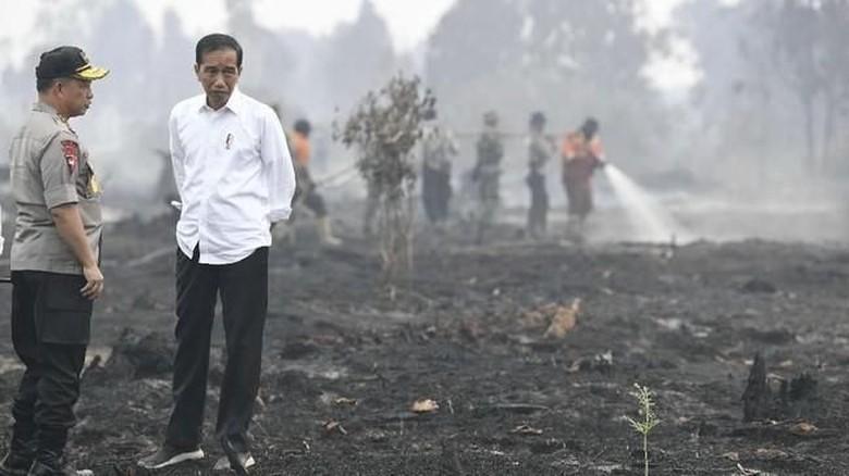 Presiden RI Joko Widodo meninjau lokasi karhutla. (Foto: ANTARA FOTO/Puspa Perwitasari)