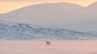 20 Tahun Ia Menjelajah Kutub Utara, Tempat Paling Tak Bersahabat di Bumi