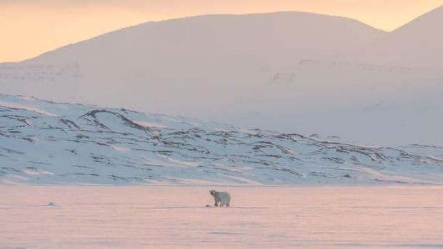 Langka! Cuma 1 Bulan, Nikmati Aurora Kutub Utara di Igloo