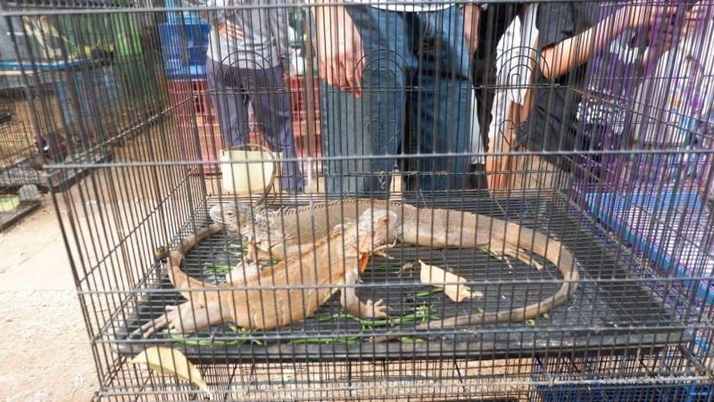 Asyik, Ada Aneka Flora dan Fauna di Lapangan Banteng