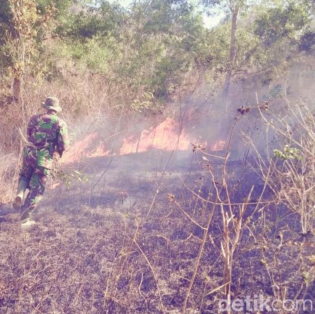 Hutan Seluas 2,5 hektare di Gunung Orak-arik Trenggalek Terbakar