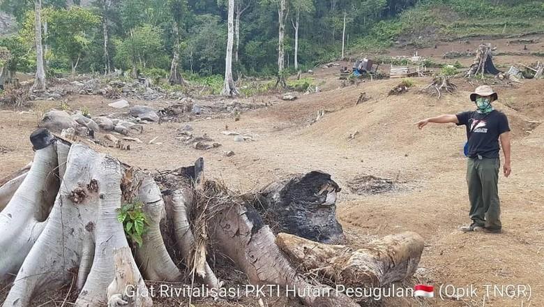 Hutan Pesugulan di Gunung Rinjani (BTNGR/Instagram)