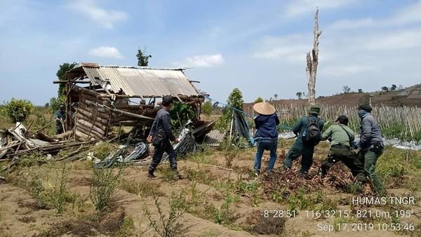 Perobohan gubuk kerja dan pembersihan kawasan hutan dilakukan setelah batas waktu yang telah ditetapkan sebelumnya, yakni 1 x 24 jam dari tanggal 14 September lalu (BTNGR/Instagram)