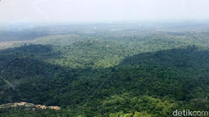Presiden Joko Widodo memutuskan ibu kota baru Indonesia di Kalimantan Timur (Kaltim. Berikut ini penampakan salah satu titik lahan untuk ibu kota baru di Kaltim