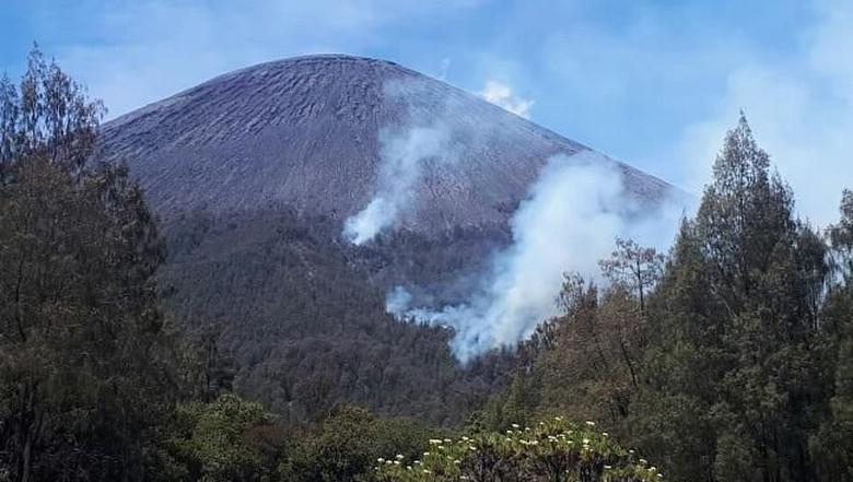 Hutan Gunung Semeru yang terbakar (tnbromotenggersemeru/Instagram)