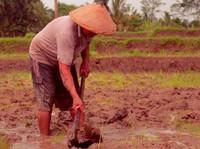 Mentan Syahrul: Data Pangan Wajib Pakai Punya BPS!