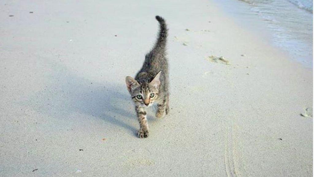 Foto: Perkenalkan Gracie, Si Kucing Pantai