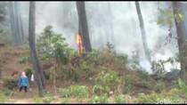 Hutan Pinus di Gunung Geulis Learning Center Brebes Terbakar