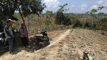 Jeritan Petani Jagung Tulungagung Gegara Pupuk Subsidi Masih Diblokir
