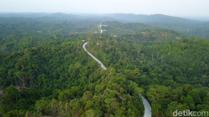 Lokasi ibu kota negara yang baru di Kabupaten Penajam Paser Utara (PPU) dipastikan akan di kelilingi oleh hutan. Hijau dan asri, beginilah penampakannya.