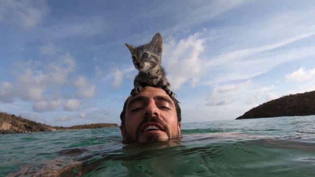 Gracie, Si Kucing Imut yang Suka Laut