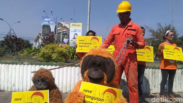 Aktivis Lingkungan: Orangutan Tapanuli Terancam PLTA Batang Toru